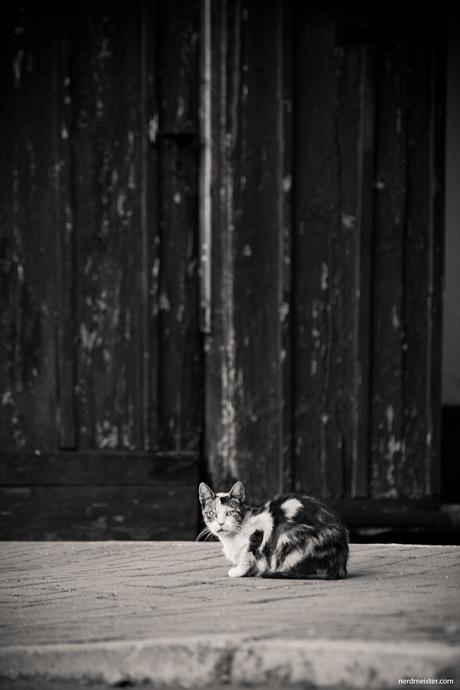 Katze vor Scheunentor, Haarhausen